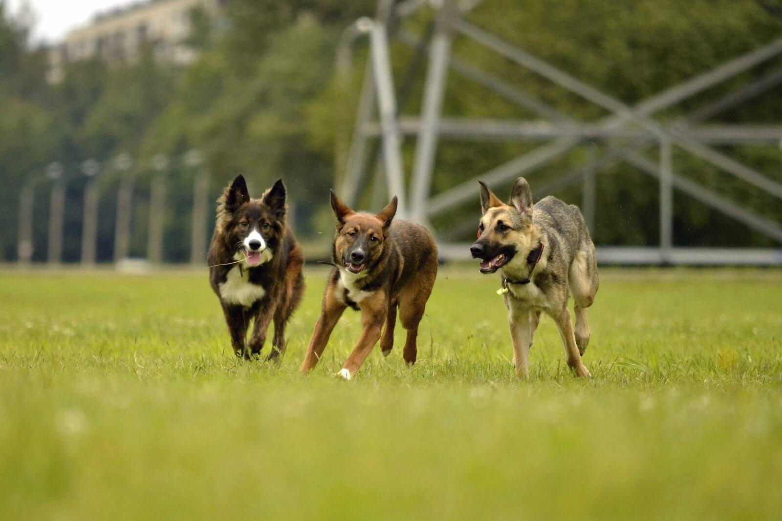 settlement for dog bites in nevada